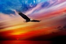 Modern Home Decor bird Animal Eagle oil painting picture Printed on Canvas III