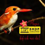 Shop.TropicMedia - Hoyas and more