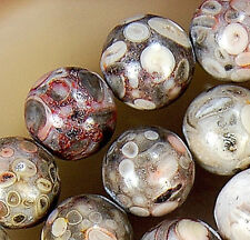 8mm Natural Flowery Cowry Fossil Round Beads 15.5""