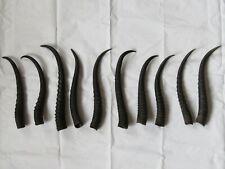 Véritable corne de springbok femelle chasse trophée taxidermie Prix pour 1 corne