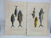 Original Antique Hand Colored Fish Print Lacepede 1840 Plates 55 & 56 Cuvier