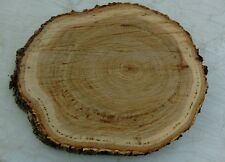 """15 Pc 8"""" by 6"""" Red  Oak Log oval Slice Wood Disk Rustic Wedding Center Coaster"""