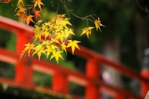 Pictures of beautiful home gardens in japan