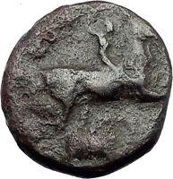 KASSANDER killer of Alexander the Great's FAMILY Ancient Greek Coin Horse i62774
