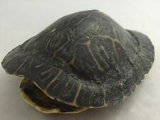 Real Turtle Shell - 6 - 7 inch Long - River Cooter or King Turtle - Taxidermy