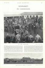 1896 Horse Race Newmarket Southfield Stud Paddocks The Cambridgeshire