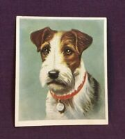 *Advertising Tobacco Dog Card GODFREY PHILLIPS Wire Haired Fox Terrier CIGARETTE