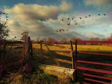 PHOTOGRAPH LANDSCAPE RURAL FIELD GATE FARM GEESE FLIGHT AUTUMN POSTER MP3510A