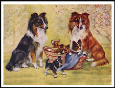 SHETLAND SHEEPDOG SHELTIE DOGS AND PUPPIES CHARMING DOG PRINT POSTER