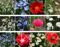 Wildflower seeds 1,000 red, white and blue mix wildflower seed mix 1,000 seeds