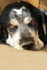 The Bluetick Coonhound Dog Journal : 150 Page Lined Notebook/diary by Dog.