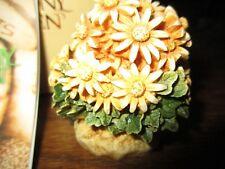 Harmony Kingdom Daisy Flower Box Figurine Lord Byron's Ladybug