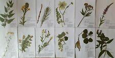 Herbarium 30 Pflanzen