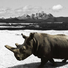 GILLIE AND MARC-direct from the artists-authentic photography print rhino Africa