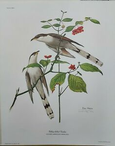 """Ray Harm Yellow-Billed Cuckoo Signed Print 16""""x20"""" Mint Condition Wildlife Art"""