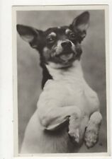 Dog France 1931 RP Postcard 440a
