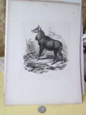 Vintage Print,NEEGHAU,1831,Animals,Landseer