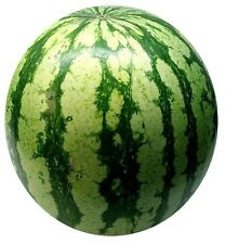 🍉Very Delicious🍉Juicy And Aromatic Watermelon🍉10-Finest Seeds🍉UK Seller🍉/