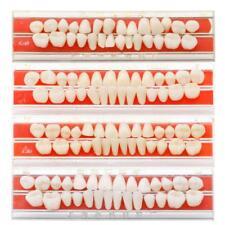 1 Set 24# Dental Teeth Dentures Material Alloy-Pin Porcelain Colors Shade Guide