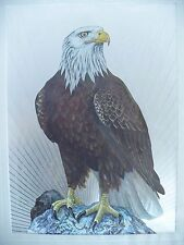 Vintage American Blad Eagle 3D Picture Art Metal Etching. Made in England
