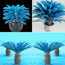 POP 100Pcs Blue Cycas Seeds Sago Palm Tree Seeds Bonsai Blower Home Decor Garden