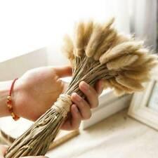 20PCS Bunch Bunny Tails Lagurus Ovatus Grass Dried Flower For Home Wedding Decor