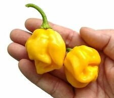 Free Shipping * 25+ Premium Harold's St Bart's Hot Pepper Seeds