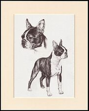 BOSTON TERRIER LOVELY DOG SKETCH PRINT MOUNTED READY TO FRAME