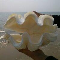 Furnishing Marine Sea Decor 8-10cm Ornaments Shell Wedding Decoration Big Conch
