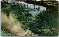 """Yellowstone National Park Postcard """"Trout as Seen in Clear Stream"""" HHT c1920s"""