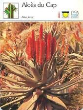 FICHE CARD Aloès du Cap Liliacées Aloe Ferox flowering succulent Plant 90s