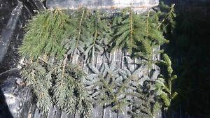 "Fresh Cut Real Boughs 20 15"" Greens Evergreen Mix Tips Christmas Winter Wedding"