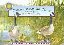 Canada Goose at Cattail Lane (Smithsonian's Backyard)