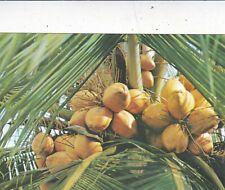 King Coconuts Sri Lanka Postcard unused VGC