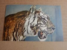 Postcard Siberian Tiger Head Study Colour Card  Unposted