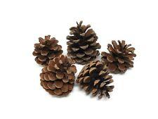 1kg Natural Fir Pine Cones Austriaca Florist Christmas Wreath Making
