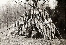 ANTIQUE REPRO 8X10 PHOTO 63 RED FOX & 5 SILVER FOX TRAPPING FURS HIDES SKINS