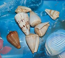 1/2 POUND OF ASSORTED POLISHED CONE SEA SHELLS BEACH DECOR CRAFT TROPICAL