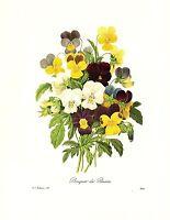 1991 Vintage REDOUTE FLOWER #97 PANSY PANSIES BOUQUET Color Art Print Lithograph