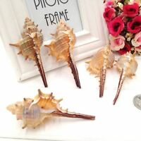 Natural Seashells 6-10cm Long Spiral Shell Conch DIY Craft Micro Landscape Decor