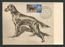 SAN MARINO MK 1956 HUNDE DOGS IRISH SETTER CARTE MAXIMUM CARD MC CM d7676