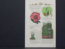 James Vick Seed Catalog Rocheter, N.Y. Flowers/ Vegetables, Hand Colored s#010