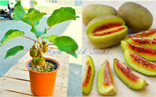 Amazing MINI kiwi plant 'Dwarf Pautske' from Japan VERY RARE SEEDS!