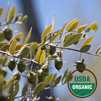Jojoba Oil - Organic, Golden (Simmondsia Chinensis) - FREE SHIP 1 oz. - 16 oz.