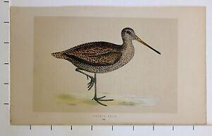 c1875 ANTIQUE PRINT ~ SABINE'S SNIPE HAND COLOURED British Birds Morris