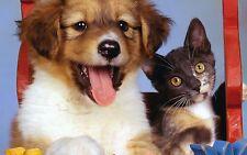 7  Kräuter Wurmkur / Immunsystem  biologisch für *Hund und Katze* 10 Gramm