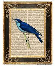 Arctic Bluebird Art Print on Vintage Book Page Birds Home Interior Decor Gifts