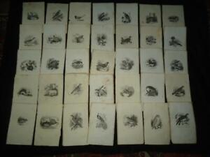 35 x book illustrations prints engravings 1850s Natural History of Selborne