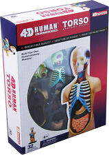 TORSO ANATOMY MODEL/PUZZLE,4D  Kit #26051  TEDCO SCIENCE TOYS