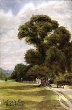 Hadley near Barnet. Latimer's Elm in The Sydbie Series.